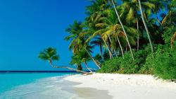 ... Palm Trees Background Hd With Tropical Beaches Tropical With Architecture Ideas And Tropical Beaches With Palm ...