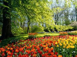 Free Tulip Field Wallpaper; Tulip Field ...