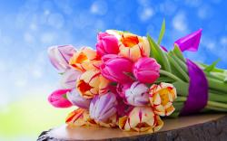 Tulips bouquet hd