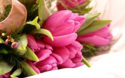 Flowers Tulips Bouquet