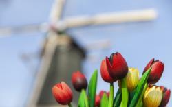 Tulips Bouquet Wooden Focus Mill
