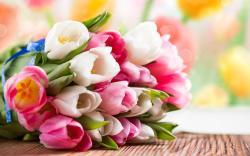 Tulips Bouquet Bokeh
