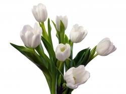 White Tulips Bouquet Cool