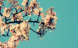 flower wallpaper tumblr blue background