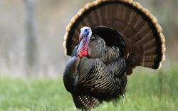 Ever Wonder What It Would Be Like To Hit a Wild Turkey With Your Car Going 95 MPH? [Video] | 92.7 QLZ