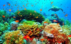 Underwater beauty turtle corals fish reef 1280x800