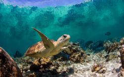 ... Underwater Turtle ...