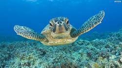 Turtle 1080p