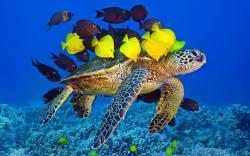 Turtle Yellow Fish Underwater Ocean