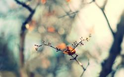 Twig Leaf Spring Nature