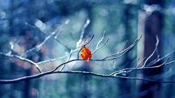 Twig Leaf Autumn