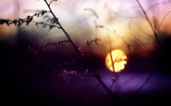 Evening Twig Nature Sunset Photo HD Wallpaper