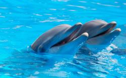 Related For Two Dolphins. Dolphins