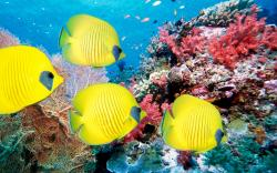 Corals Wallpaper and Underwater World Of Tropical Fish 1920x1200px