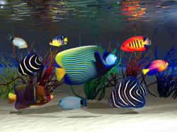 Underwater world Fish Animals Wallpapers and photos