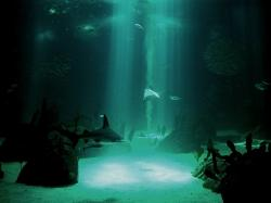 Normal 4:3 resolutions: 800 x 600 1024 x 768 Original Link. Download Underwater Wallpaper ...