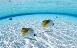 Underwater Wallpaper Image HD Background