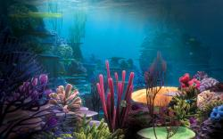Underwater Scene Wallpaper 21216