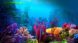 Underwater World HD Wallpapers