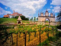 Austrian Vineyard