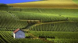 1920x1080 Man Made Vineyard