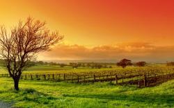 Vineyard Wallpaper