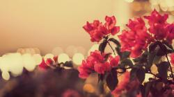 ... Vintage Flowers ...