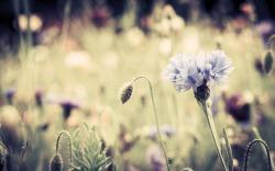 Vintage Flowers; Vintage Flowers ...