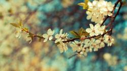 Beautiful Vintage Flowers Wallpaper ...