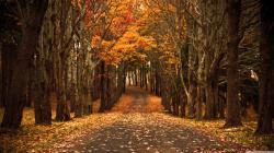 late_autumn-wallpaper-3840x2160