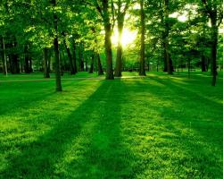 Green Forest Wide Secreen Wallpaper