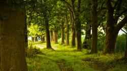 Trees HD Wallpaper