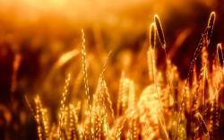 Closeup Of Grass in The Warm Sun Wallpaper Resolution 2560x1600px