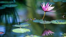 Water Flower Wallpapers