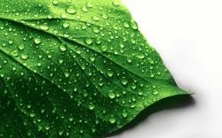 ... Wet leaf 1680x1050 wallpaper ...