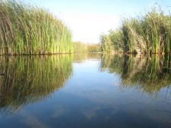At the Ballona Wetlands