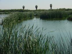 Wetlands Process Wetlands