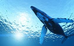 HD Wallpaper   Background ID:342086. 2560x1600 Animal Whale