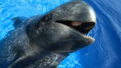 Sully the Pilot Whale Webisode 38