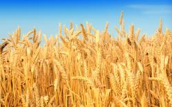 "US weather fears which have sent wheat prices soaring are ""unlikely to prove long-lasting support"", Rabobank warned, also urging against over-optimism on ..."