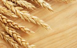 Wheat requirement in the US will increase manifold by 2050 to meet the demands of the growing population, especially since wheat is largely considered to be ...