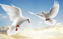 White doves retina