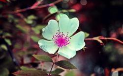 White flower pink seeds