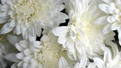 White Flowers Hd Desktop Wallpaper High Definition