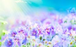http://www.mrwallpaper.com/wallpapers/purple-white-flowers.jpg on Pinterest | Stretching, Colored Contacts and Strapless Maxi Dresses