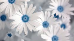 Blue and White Flowers Wallpaper