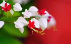 """Download the following White Flowers Wallpaper 1378 by clicking the button positioned underneath the """"Download Wallpaper"""" section."""