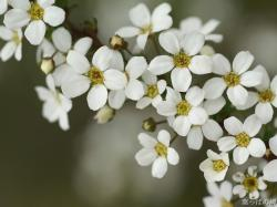 White Flowers Images 24 HD Wallpapers