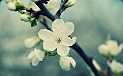 Nice White Flowers
