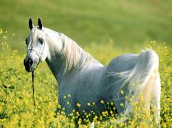 White horse nature field horses animals 1600x1200